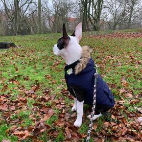 Staffordsherrier bull terrier/ Amerikansk bulldog Det er med kæmpe sorg og en grim byrde i hjertet, at jeg er nået der til hvor jeg må tænke på min hunds ve og vel. Grundet ændringer i personlige forhold og jobskifte, tillader det sig desværre ikke at have hund, da jeg sjældent er hjemme.   Astina er jordens dejligste og mest kærlige hund. Hun elsker livet, og elsker mennesker! Også børn! Hun er god mod alle hun møder på hendes vej, også andre hunde.   Hun kom til danmark fra Serbien som lille hvalp. Og derfor haves der hundepas til hende.  Hendes oprigtige navn ifølge pas er dog Atina, men jeg synes Astina lød bedre.  Hun trives godt med alt og alle. Og er meget dygtig til at høre efter. Og så er hun lærenem! Hun sitter, giver pote og kan dække. Astina elsker at være ude og lege og gå en lang tur. Ellers er hun sund og rask og har fået alle vaccinationer.   Jeg forbeholder mig retten til at kunne afvise eventuelle interesserede, hvis jeg ikke bedømmer dem egnet som nye ejere af Astina.  Det er et krav at hun skal have et fast og blivende hjem for hum ville kunne trives, og jer ser helst at det ikke er første gangs hunde ejere der skal overtage hende.   Der medfølger diverse snore, seler, kurve, madskåle og mad til det første stykke tid.   Skriv endelig hvis du har spørgsmål