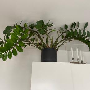 Ferm Living plante