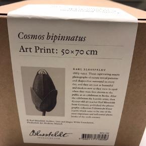 Ny Cosmos bipinnatus fra Blossfeld  Ny pris ca. 359,- kr  Sendes gerne uåbnet (Ikke pakket ud) - leveres i original indpakning