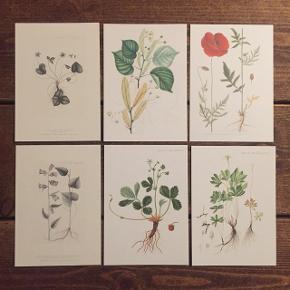Fine små illustrationer af forskellige flora. Måler 10,5x15 og koster 10 kr. stykket. Kan sendes med postnord for 10 kr.  Se min profil for flere 🌿