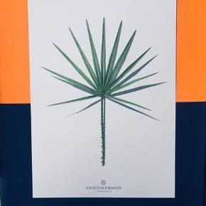 Fotografier af blade af Hagendornhagen 🌿🌱 Måler 29,5 x 21 cm. Prisen er for alle 6 plakater   Se også mine andre annoncer, jeg giver mængderabat 🌷