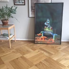 Plakat med frøer evt til børneværelset 62x93 cm UDEN ramme
