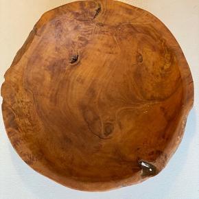 Oliventræ 30 i diameter