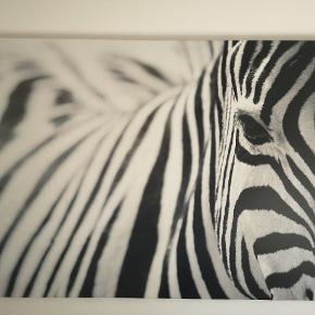 Fint billede (foto på kanvas) Mål højde 72. Længde 118