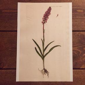 Fine flora plakater 🌼🌿Måler 21x30 Se mange flere motiver på min profil Kan sendes for kun 10 kr. via postnord 🌸