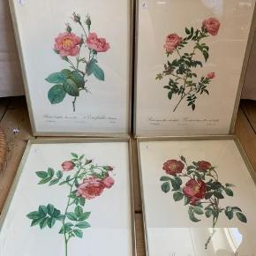 Super flotte retro billeder af roser. 4 forskellige slags, alle i original ramme. Meget fine!   🌱 1 stk 100kr 🌱 2 stk 175kr 🌱 alle 4 300kr  🌱Sender gerne