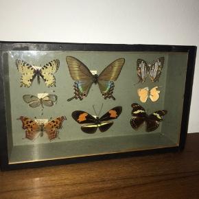 Smuk sommerfugle ramme
