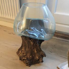 Glas Bowl på træ rod