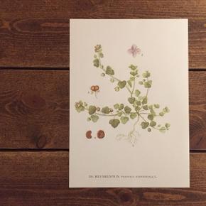 Smukke flora plakater 🌿 Måler 30x21 Kan sendes med postnord for 20 kr.  Se min profil for flere