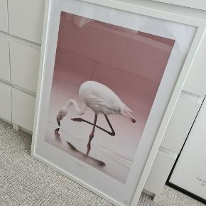 Plakat fra Posterstore. 50 x 70 cm. Rammen fra Ikea medfølger.