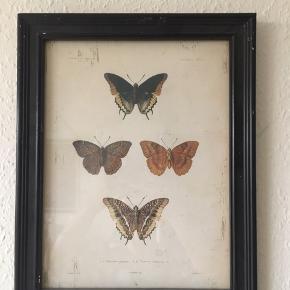 Fint billede med sommerfugle. Har hængt oppe i et par måneder, ser ud som ved ved køb ☺️