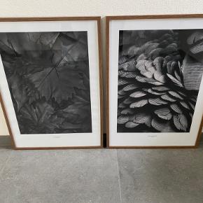 Fin valnød ramme med minimalistisk sort/hvid plakat.  Mål : 50 x 70 cm. Fejler intet.  Har 2 stk til salg - sælges samlet eller hver for sig. Prisen er pr. stk.  Kan afhentes i 9240 Nibe.