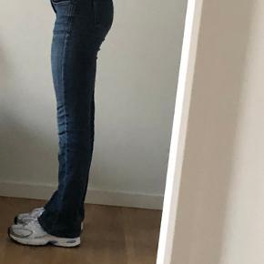 Pieszak jeans