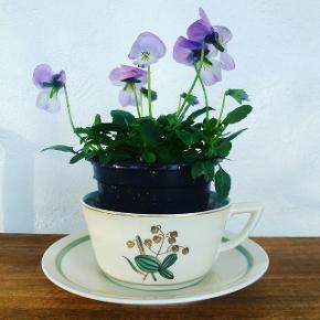 Hjertegræs te og kaffe kopper. Vintage stel. Slid på guldkant. Pris pr kop med underkop