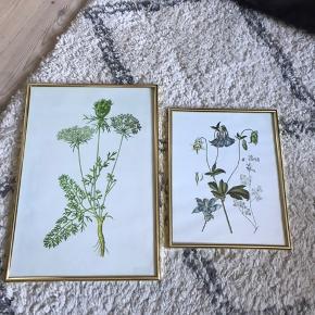 Fineste billeder med blomster. Vil hænge fint i et køkken feks. Skal afhentes i Hellerup.  Sælges samlet.  Den angivne pris er for begge billeder.