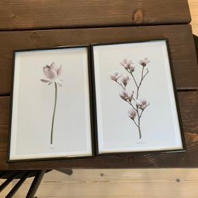 Sælger disse to plakater fra Desenio med tilhørende rammer. 30 x 22 cm