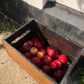 Gammel Carlsberg trækasse brugt til æbler 🍎🍏