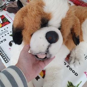 Santberner hund sælges