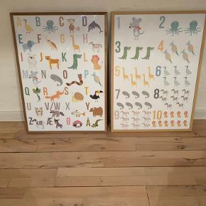Nye plakater 50*70 Alfabetplakat eller tælleplakat 🐊🐢🦋 Se mere på @kidsposterbystine på IG Sender gratis i plakatrør  Pris er pr stk uden ramme