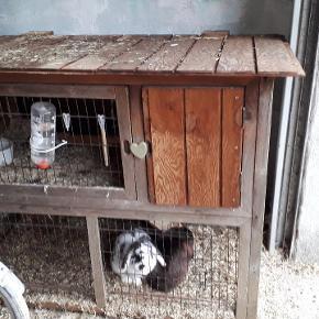 Kaniner med bur 2 damer.  300 kr for 2 kaniner og gammel bur. Men den virker