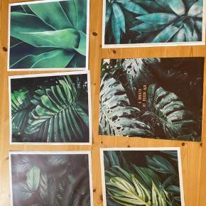 Alle billederne er 60x40. Sælges kun da jeg har skiftet billederne på min billedvæg