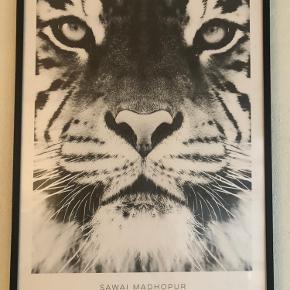 Fin plakat + ramme fra Desenio i str. 50 x 70 cm