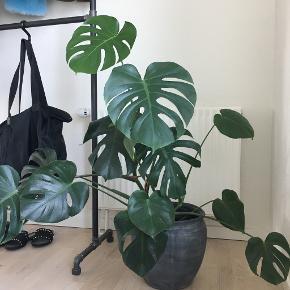 Sinnerup plante