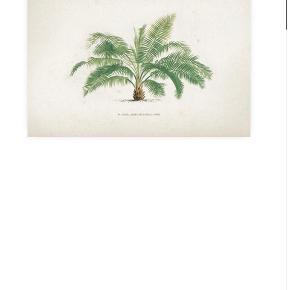 To plakater fra Desenio. 50 x 70 cm. Vintage Print Collection. Sælges samlet. Husker ikke nypris, men de står nu til 229 kr. pr. stk.