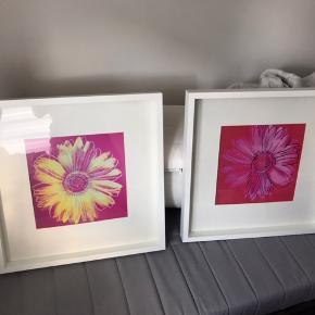 IKEA RIBBA, Ramme, hvid. Med lyserøde blomstermotiver. 60 x 60 cm. 2 stk.  * Du kan placere motivet forrest eller bagerst i den ekstra dybe ramme. * Passepartout fremhæver billedet og gør det nemt at ramme det ind. * PH-neutral passepartout. Misfarver ikke motivet. * Tilpasset i størrelsen, så flere kan hænge sammen.   IKEA RIBBA, Frame, white. With pink floral motifs. 60 x 60 cm. 2 pcs.  * You can place the subject at the front or rear of the extra deep frame. * Passepartout highlights the image * PH neutral passepartout. Does not discolor the subject. * Customized in size so more can hang together.