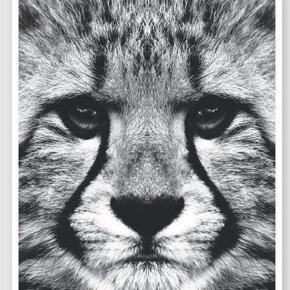 Brand: Arrogant Varetype: Plakat Størrelse: 70x100 Farve: MULTI  Flot plakat fra arrogant. Sælges billigt. Bemærk at plakaten sælges uden ramme :-)