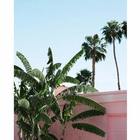 """Super flot """"Pink banana leaves plakat"""" fra Desenio med flot natur motiv i flotte lyserøde, lyseblå og grønne farver. Plakaten måler 50x70 og sælges uden ramme. Nyprisen for plakaten var 229kr. Plakaten er aldrig blevet brugt."""