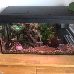 Velkørende 60 liters akvarie m tilbehør sælges 🤗 Fisk medfølger hvis man ønsker det