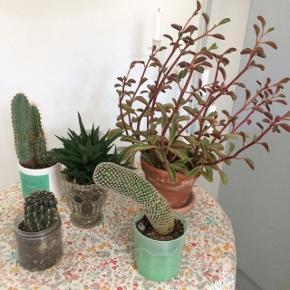 Planter skal væk hurtigst muligt! Byd!