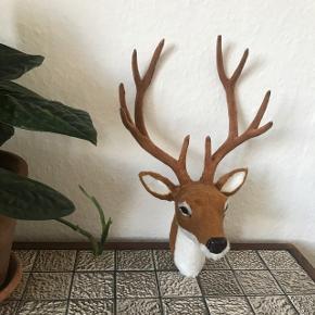 Fint lille hjortehoved med gevir til ophæng på væggen.