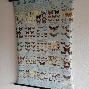 Tysk vintage sommerfugleplakat, indrammet i sort træ. Kan nemt hænges op, og vejer ikke meget. Købt for ca. 1 år siden i en vintage forretning til 500 kr.  I god stand, men med tidens tand ;)