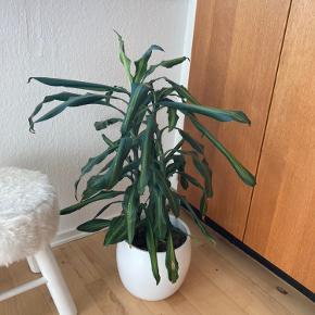 Plante sælges uden krukke