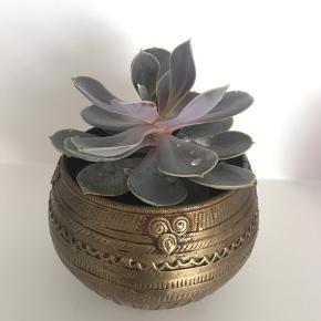 Smuk lille dekorationsplante i urtepotte med mønster. Mål på urtepotte 8x11 cm Inkl. Plantes højde ca. 14 cm