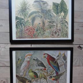 Fine gamle illustrationer / billeder i ramme til billedvæggen. De koster 125,- pr. stk. og måler 22,5 x 31 cm Bemærk illustrationerne oprindelig har været foldet på midten. De grønne farver kommer ikke helt til sin ret på fotografierne.