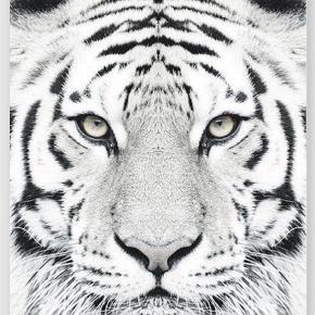 Brand: Arrogant Varetype: Plakat Størrelse: 70x100 cm Farve: MULTI
