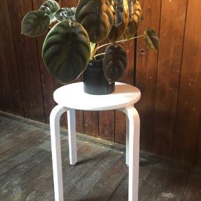 Fin lille taburet. Oprindeligt lys træfarver, malet over med hvid maling. Fejler intet. Og passer fint med en lille krukke på toppen som vist på billedet.