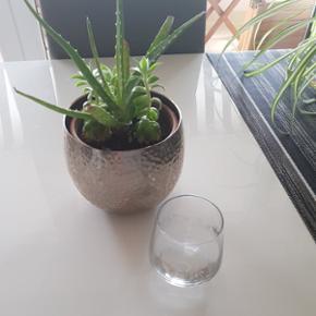 6 verres à eau (dessins plus ou moins effacés)