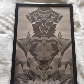 Plakater fra Paper Collective og Desenio 50 x 70 cm - 100,- stk.