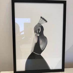 """Sanna Wieslander """"Coco Cocktail"""" billede str. A3 (29,7 x 42 cm.)Sælges inkl. sort træramme."""