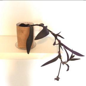 Stor 'vandrende jøde/lilla hjerte' hængeplante i pap-skjuler. Er nem at holde og kan blive meget større.  Blomstre af og til, se billede 2.  (Underskål følger ikke med)  Fast pris.  Mødes og handle på Nørrebro ved Runddelen.  Bytter ikke.