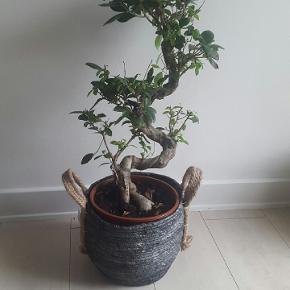Blå/grå jutekurv med hank til fx. planter eller andet opbevaring. Kurven er ret kraftig og fast i formen, og holder derfor formen pænt 😊👍 Aldrig brugt.  Køber betaler porto.   OSB. Planten følger ikke med!