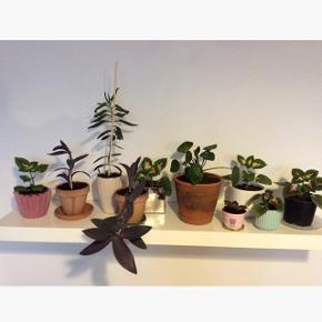Sælger ud pga. pladsmangel. Info og pris ses på vedhæftede billeder.  Planterne skal som udgangspunkt hentes på Nørrebro ☀️  Bytter ikke.
