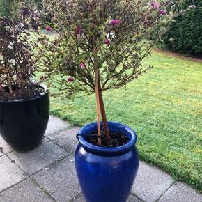 Lille krukke med plante. Krukken er 40 cm høj.