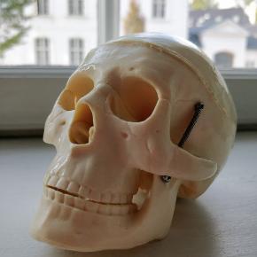 Dødningehoved i plastik med fjeder i kæben og aftagelig hjerneskal. På størrelse med 1,5 knytnæve. Købt i en kunstforening i New York