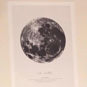 Desenio måne plakat, 30x40 cm. Ekskl fragt. Sort IKEA ramme kan medfølge.