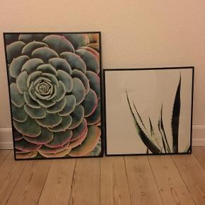 Indrammede plakater m. naturmotiv fra Ikea. 40 kr. pr. styk. Perfekt stand.